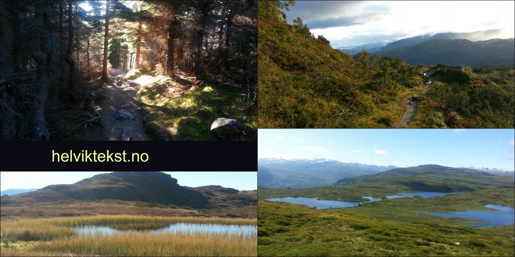 Bilete 1: Sti i ein granskog, bilete 2: Sti på fjellet, bilete 3:Eit tjern, bilete 4: Eit fjellvatn (Halsavatnet)
