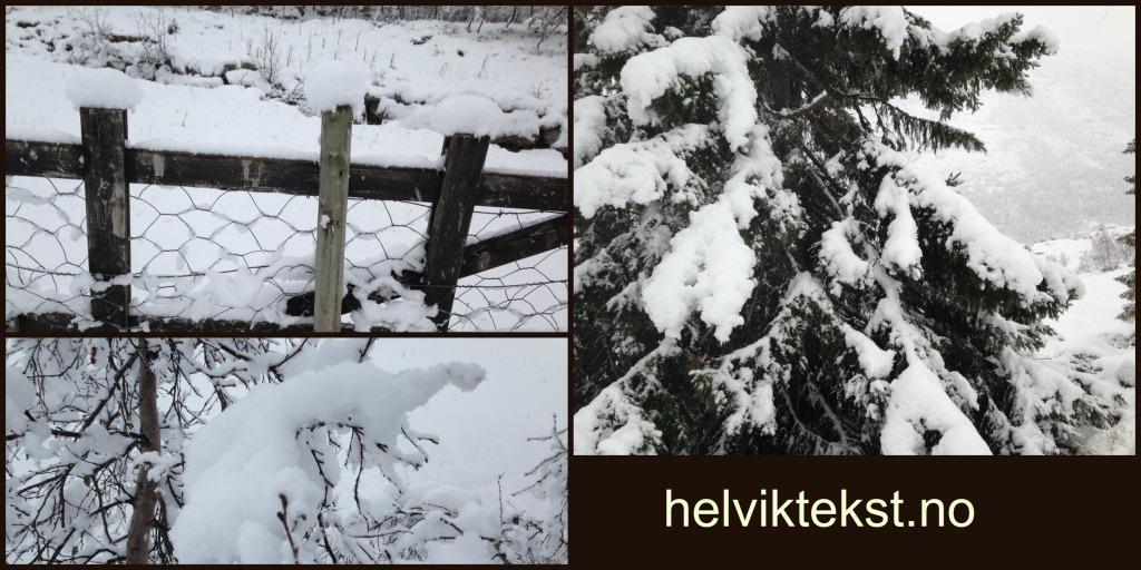 Ei grind med masse nysnø på. Eit grantre med snø på, og greinene på eit lauvtre fullt av snø.