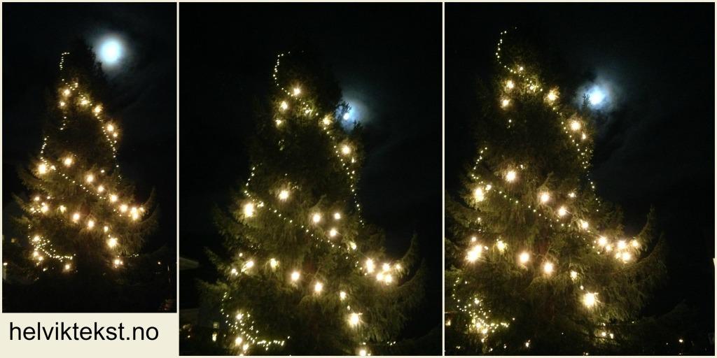 Tre bilete av det same juletreet, opplyst av måneskinet (månen er bakom treet).