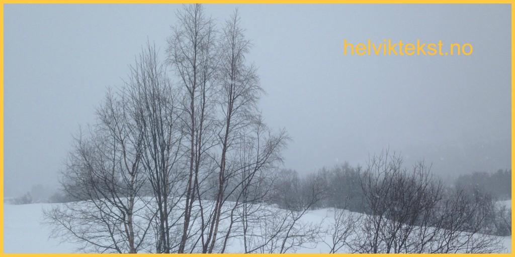 Bilete av nakne lauvtre i eit snølandskap.
