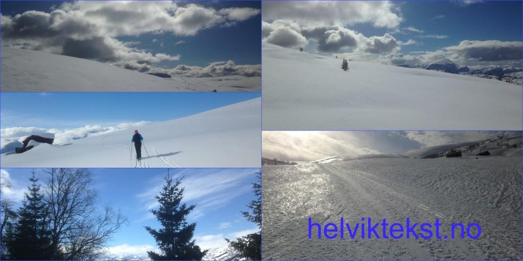 Ulike bilete av snølandskap og skispor.