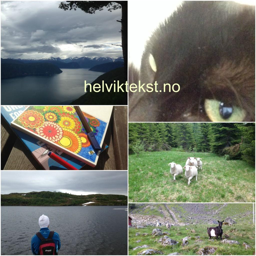 Bilete av landskap, fargeleggingsbok, ein katt, sauer og geiter.