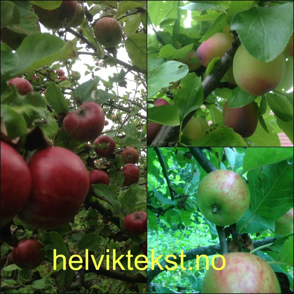 Bilete av eple- og plommetre.
