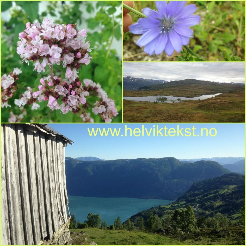 Bilete av diverse blomar, eit fjellvatn og ei gamal løe over Sognefjorden.